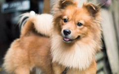 Dog show: want to enter your pup to a dog show?