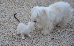 Cani odiano gatti: è davvero così?