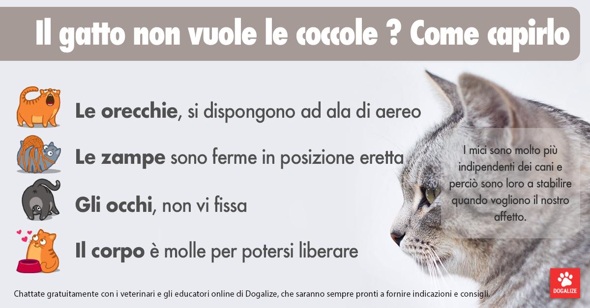 Infografica: come capire se il gatto non vuole le coccole