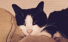 Gatto salva famiglia da una perdita di monossido di carbonio