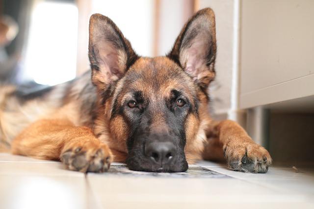 Gastrite cane, cause e rimedi della patologia