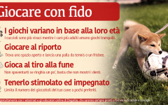 Infografica: giocare con il cane, tutti i consigli