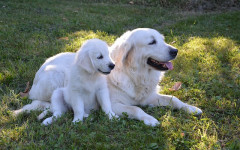 How long are dogs pregnant? A dog's gestation period