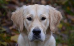 Nombre científico del perro: descubre su significado