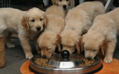 Cibo per cani Royal Canin - crocchette royal canin