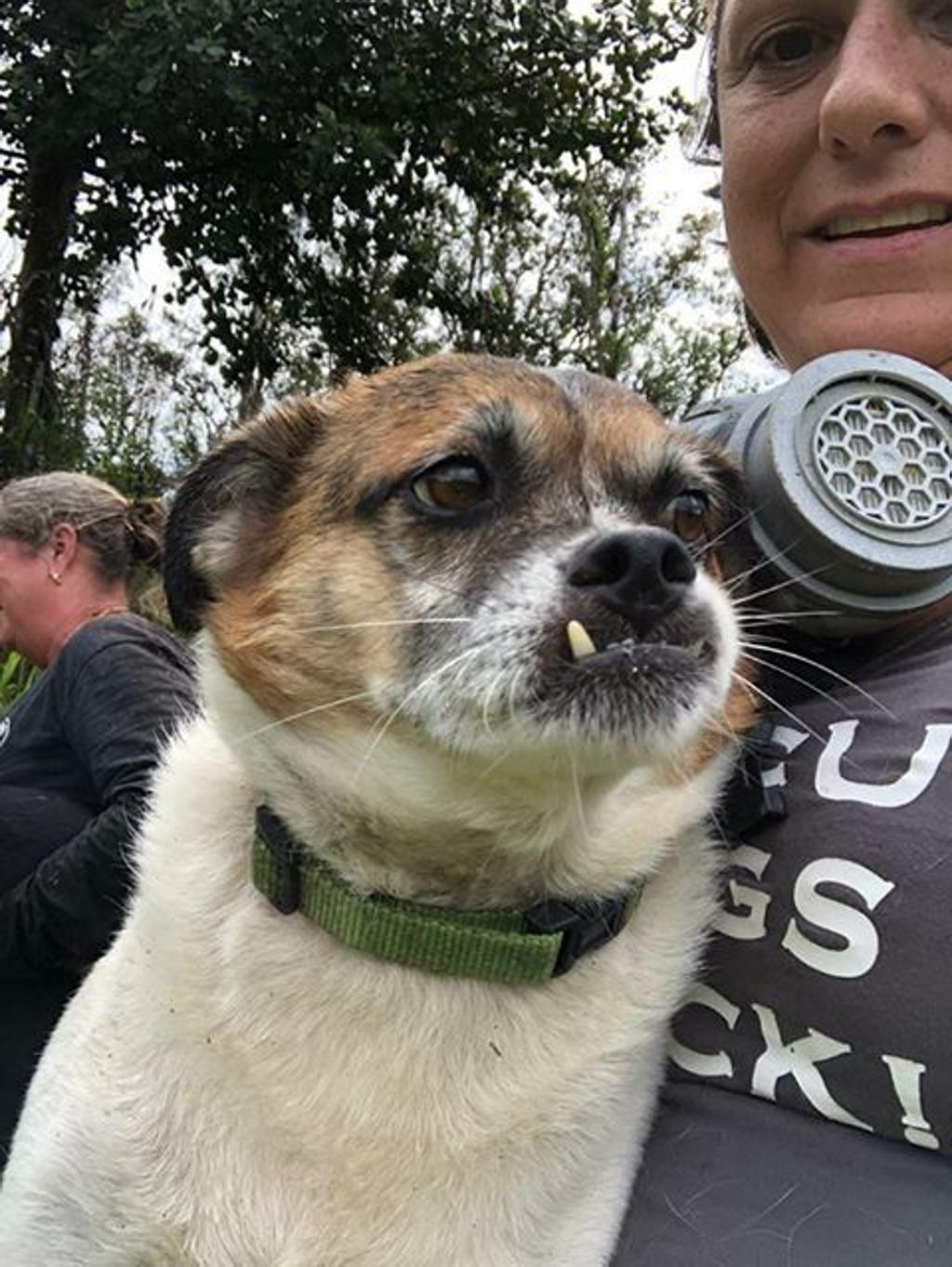 Cani intrappolati nel fiume di lava, sono stati salvati