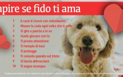 Infografica: come capire se il cane ti ama