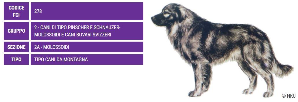 Cane da Pastore di Karst, carattere e prezzo - Razze cani