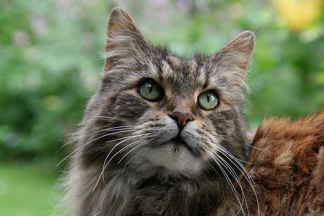 Vaccinazioni obbligatorie per il gatto: quali sono?