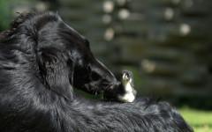 Cani adottano animali di altre razze: quali?