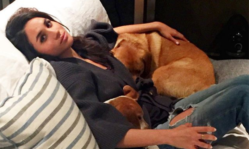 Cane adottato da Meghan Markle: come la vita di Guy è cambiata