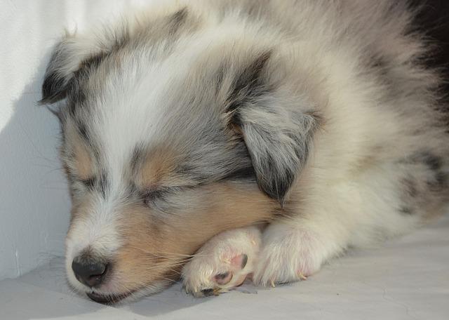 Abitudini del cane mentre dorme, quali sono?