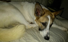 Rioko cerca casa, aiutiamolo! Appello per adozione