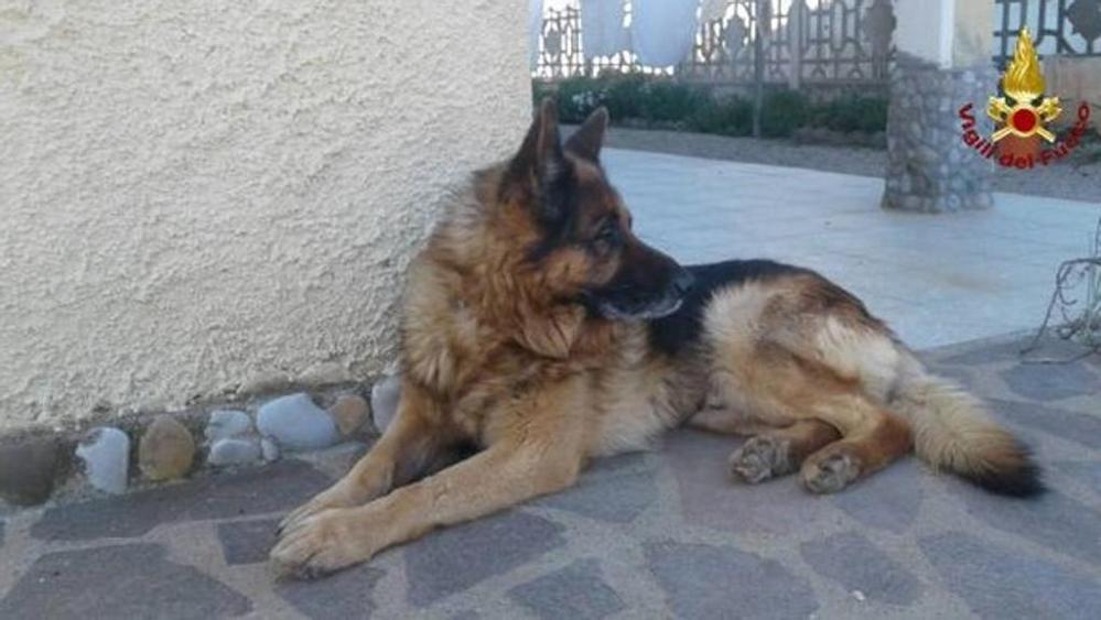 Addio a Scarck, il cane dei vigili del fuoco