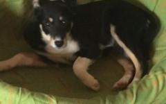 Thea cerca casa, aiutiamola! Appello per adozione
