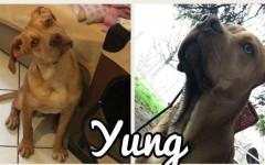 Yung cerca casa, aiutamolo! Appello per adozione