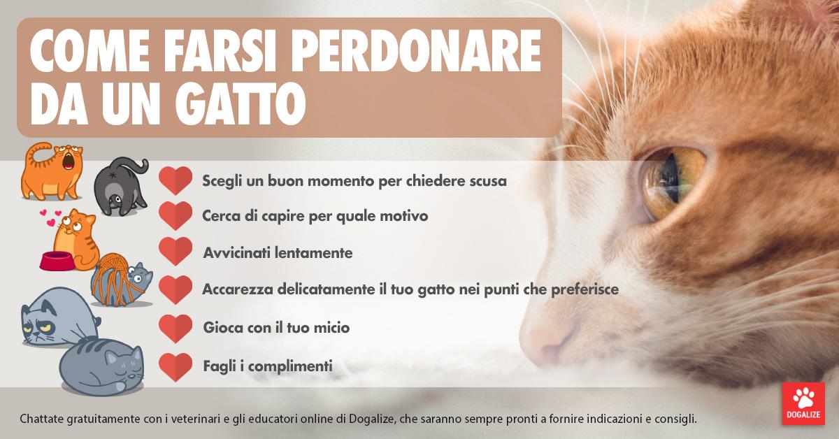 Infografica: come farsi perdonare da un gatto