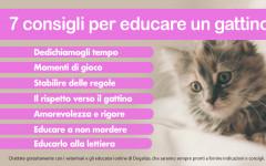 Infografica: consigli per educare un gattino