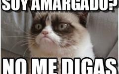 Memes de gatos: los memes de gatos más virales