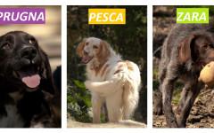 Tre cucciole cercano casa: appello per adozione
