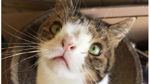 Gato con síndrome de down: ¿qué hay de cierto?