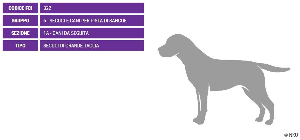 Grand Anglo Francais Tricolore, carattere e prezzo - Razze cani