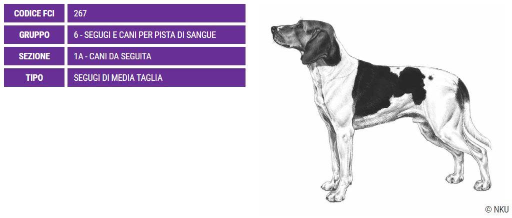 Haldenstovare, carattere e prezzo - Razze cani
