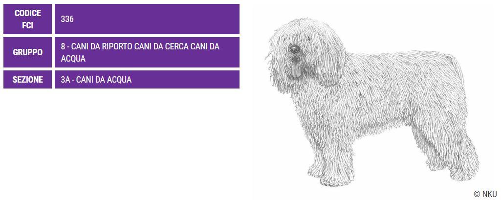 Perro de agua español, carattere e prezzo - Razze cani