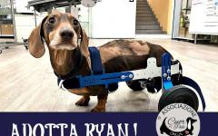 Ryan cerca casa, aiutiamolo! Appello per adozione
