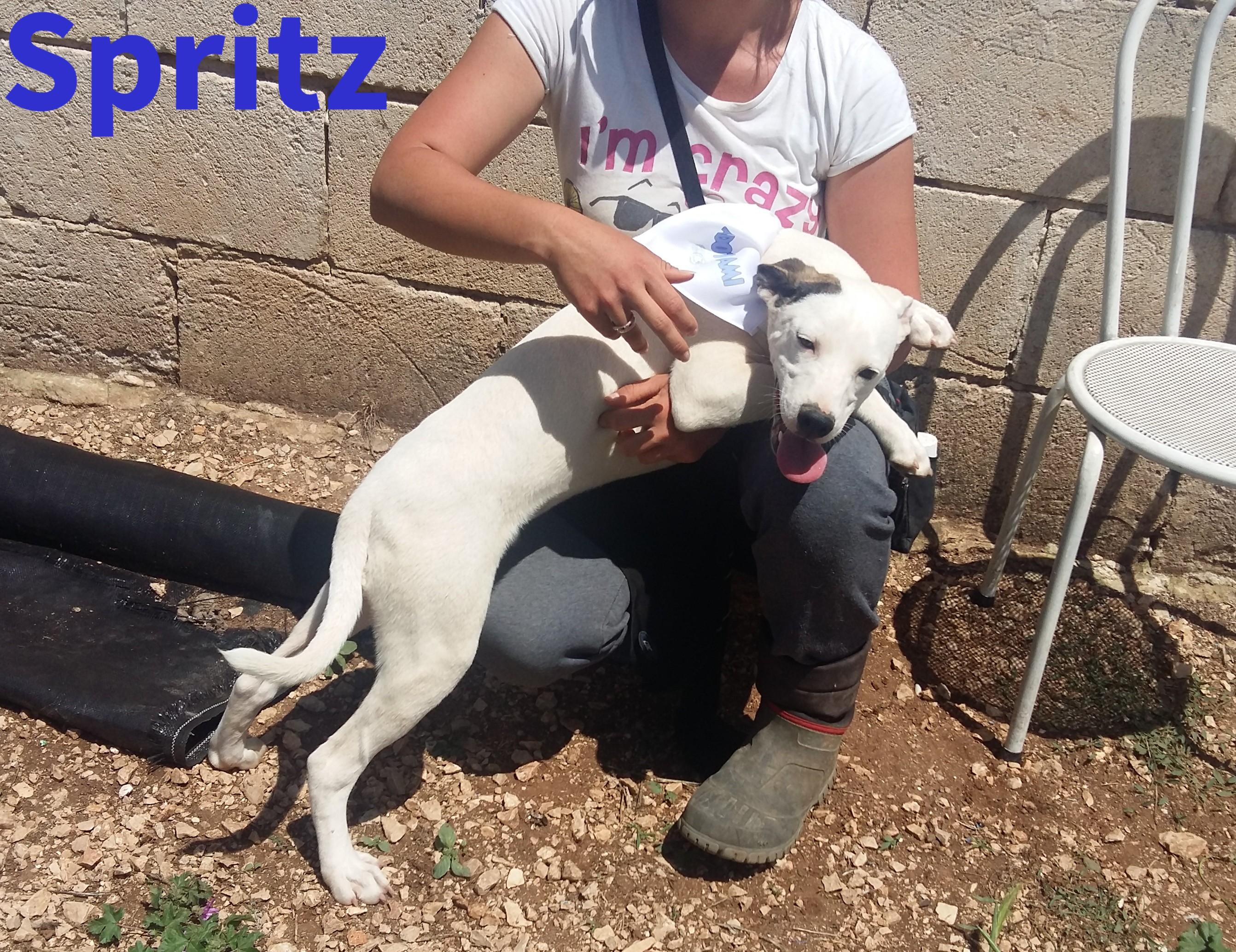 Spritz cerca casa, aiutiamolo! Appello per adozione