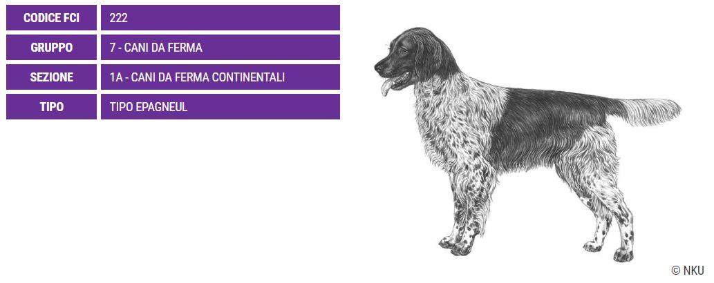 Stabyhound, carattere e prezzo - Razze cani
