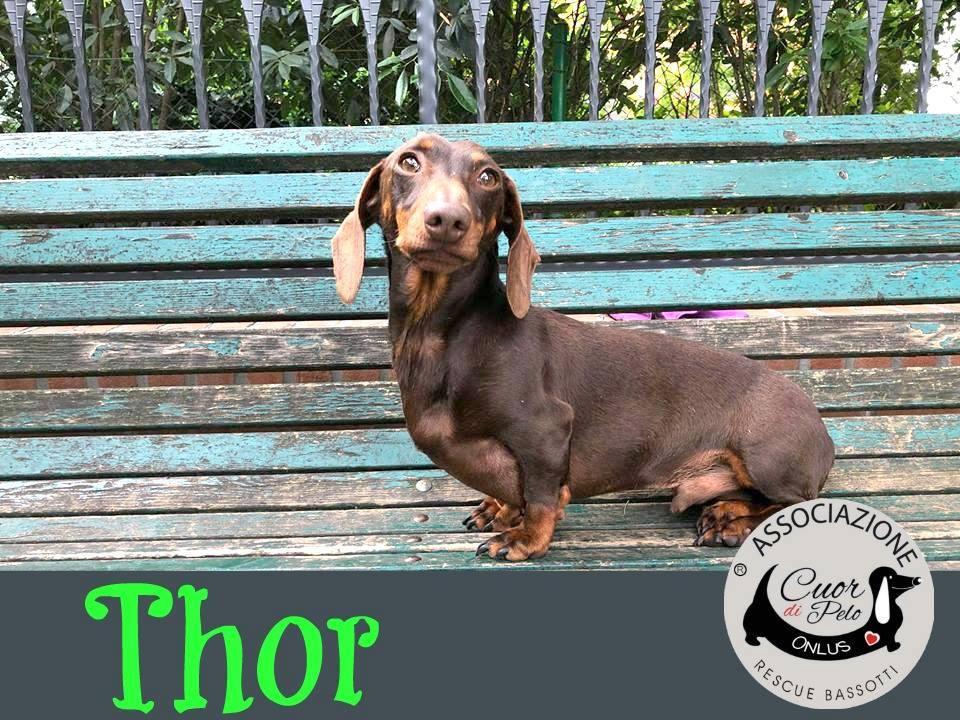 Thor cerca casa, aiutamolo! Appello per adozione