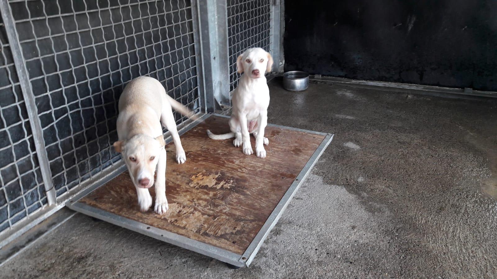 Ariel e Trilly cercano casa: appello per adozioni