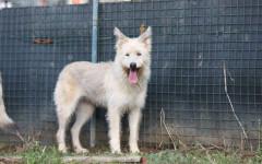 Viola cerca casa: appello per adozione