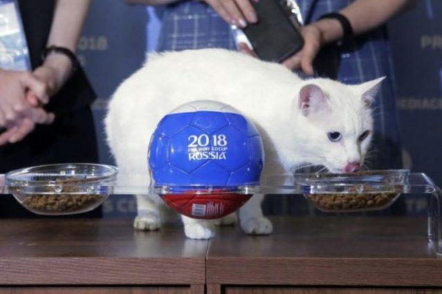 Mondiali Russia 2018: il gatto Achille è il nuovo oracolo