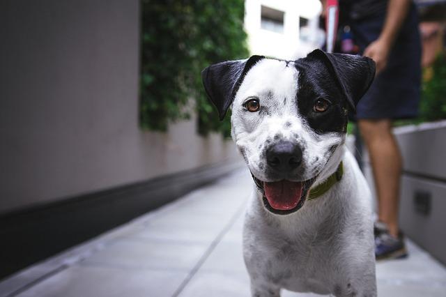 Cani e pioggia: porta fuori il cane anche quando piove