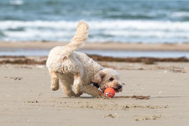 Spiagge per cani Veneto: vacanze a quattrozampe
