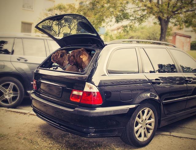 Cani lasciati in auto sotto il sole: salvati dai bagnanti
