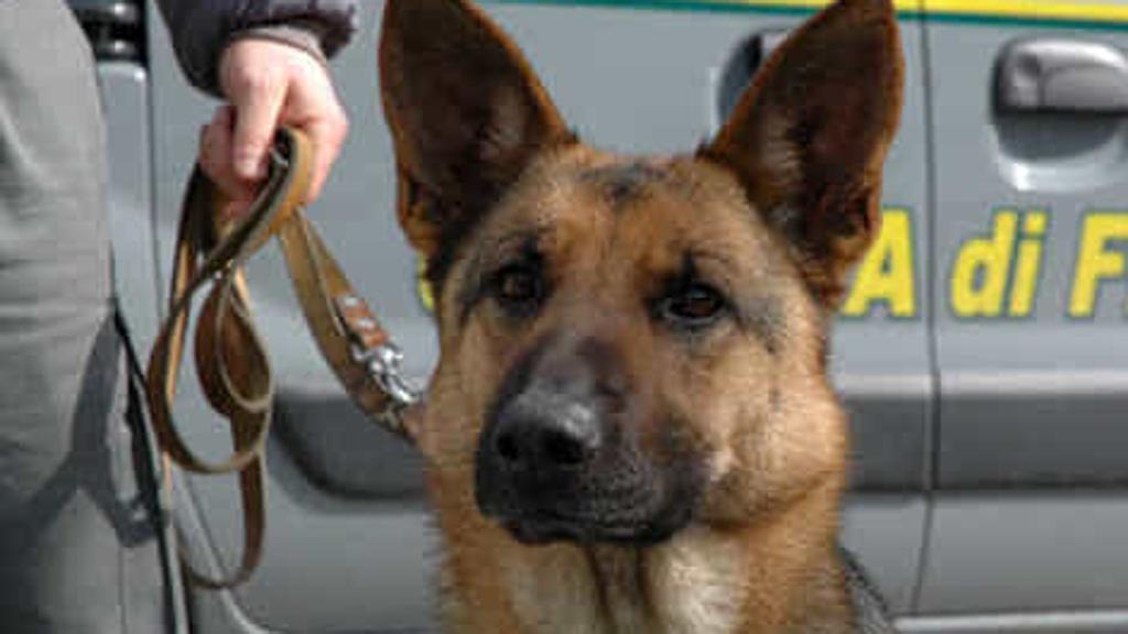 Cane Caboto salva i suoi simili, fermando traffico dall'Est