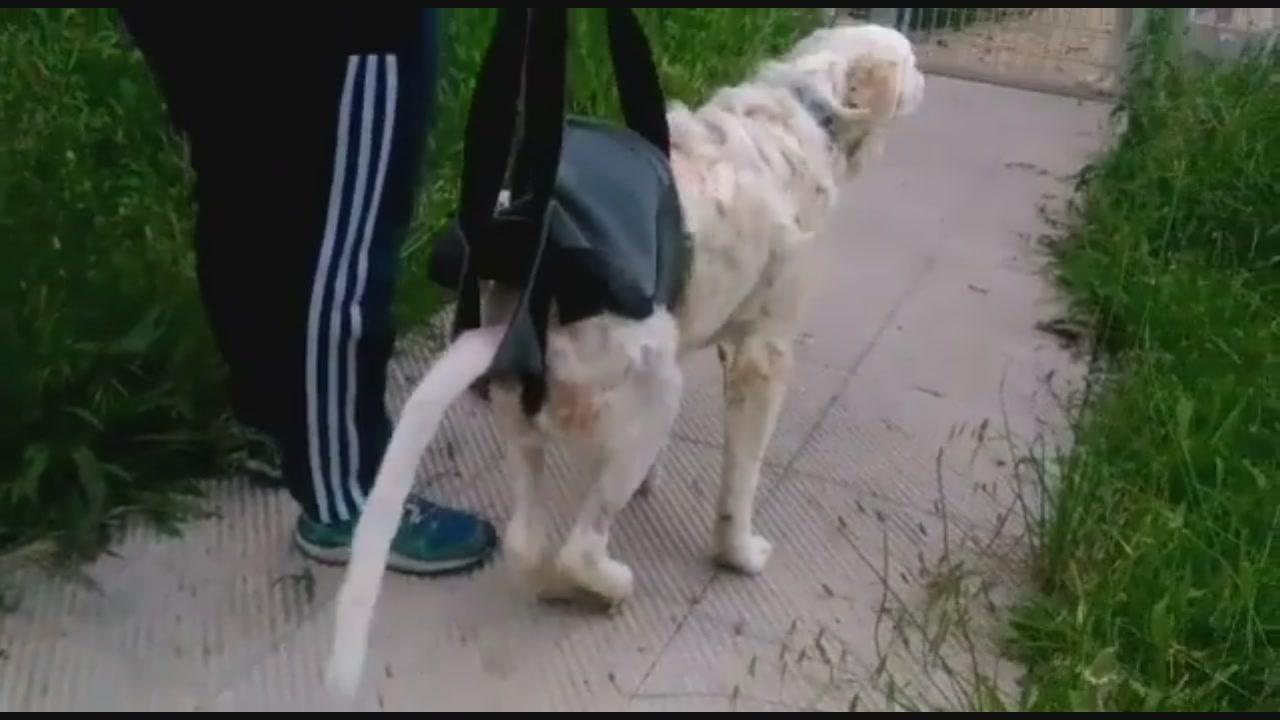 Cane gettato dal ponte riprende a camminare