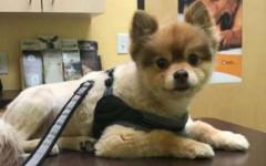 Cane muore nella stiva durante volo Delta Air Lines