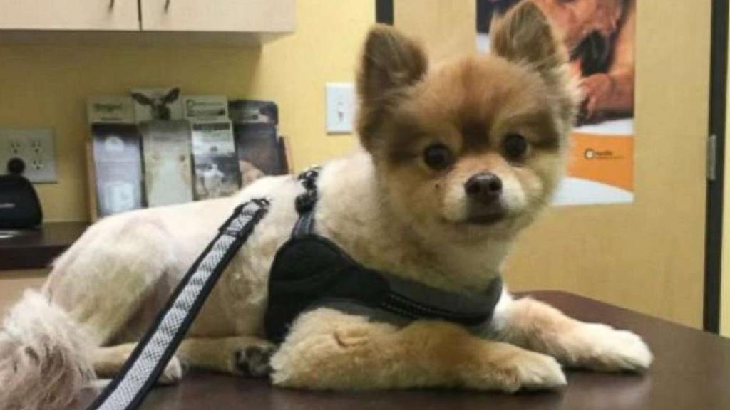 Cane muore nella stiva durante volo delta air lines dogalize for Cane nella cabina dell aereo