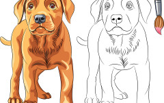 Perro colorear: cómo dibujar a un perro