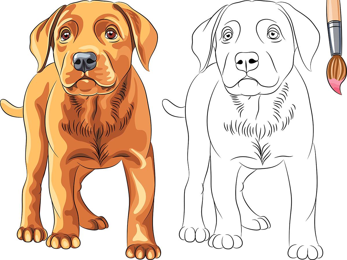 Perro colorear: cómo realizar el dibujo de un perro - Dogalize