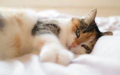 Gatto ricorda i suoi umani, anche dopo mesi di separazione?