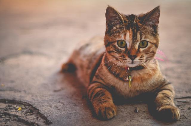 Cuanto viven los gatos: una introducción a la vida felina