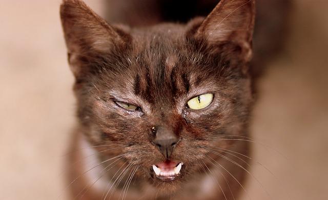 Gato feo: un gato que deja mucho que pensar