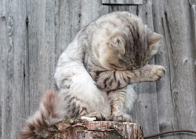 Gatto si lava dopo aver mangiato: perché lo fa?