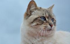 Perché i gatti hanno i baffi? A cosa servono