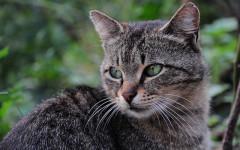Profender gatos: la importancia de desparasitar